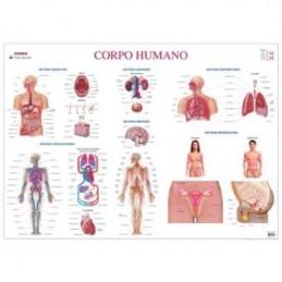 Mapa do Corpo Humano...